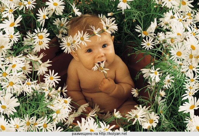 flores de Bach   cenefas de flores